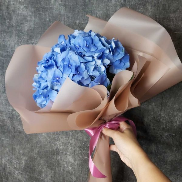 Голубая гортензия