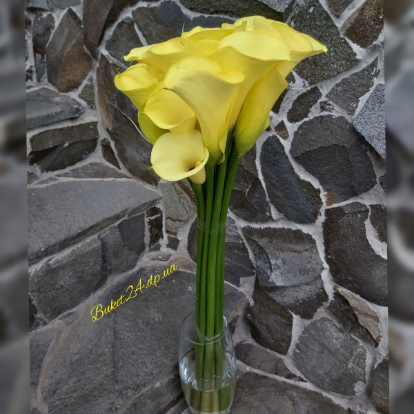 Желтые каллы