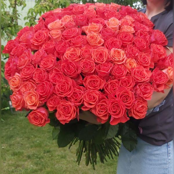 101 роза кораловая