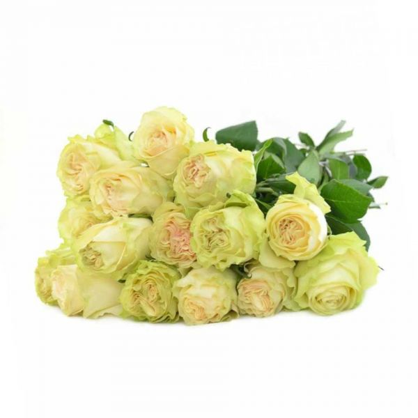 Роза Dinamic