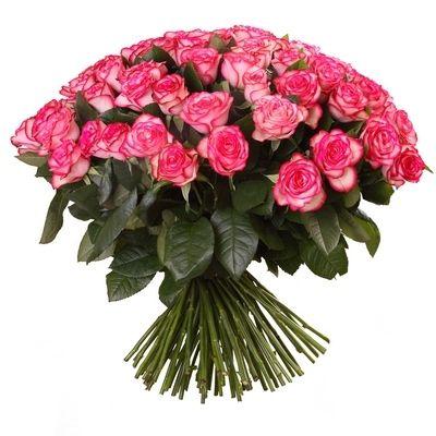 "101 Розовая роза ""Джумилия"""