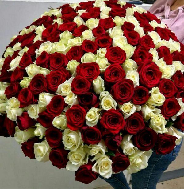 """Букет из 101 розы  """"Ваниль"""""""